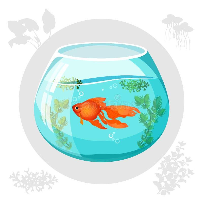 Pesce dell'oro che galleggia nell'illustrazione di vettore della ciotola dell'acquario illustrazione vettoriale