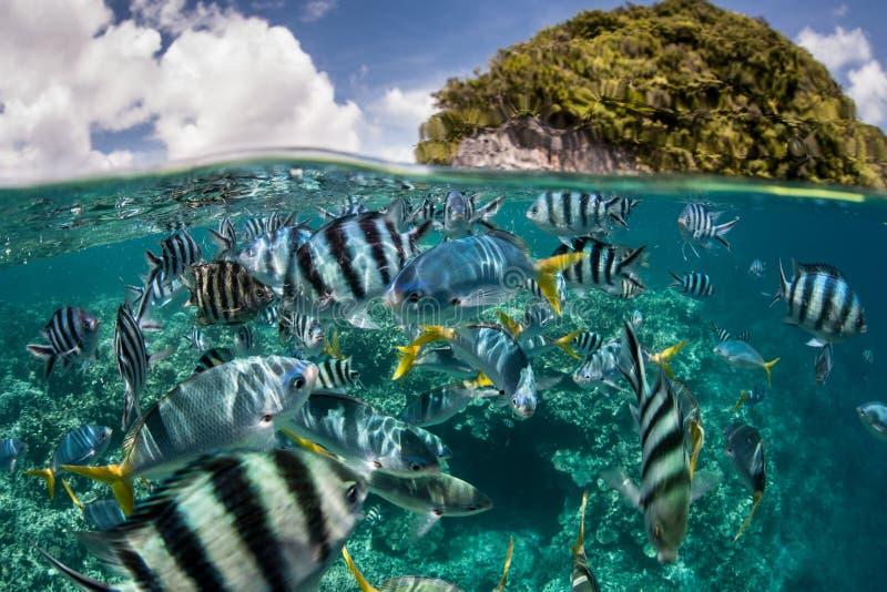Pesce della scogliera ed isola tropicale fotografie stock libere da diritti