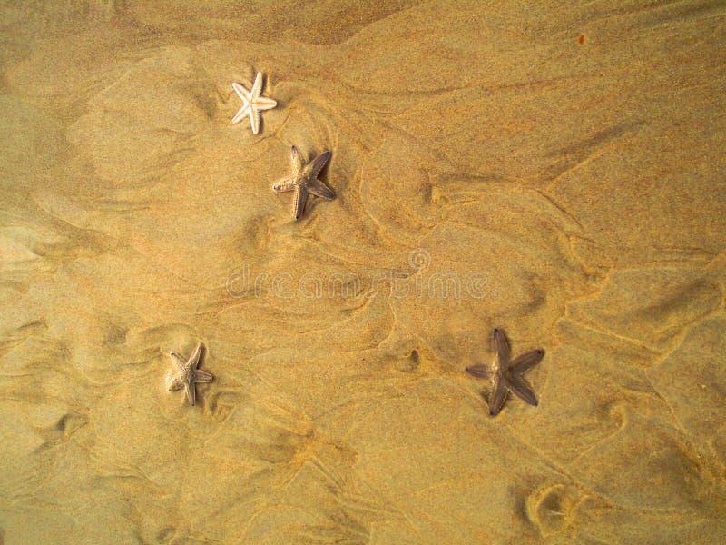 Pesce della stella immagini stock