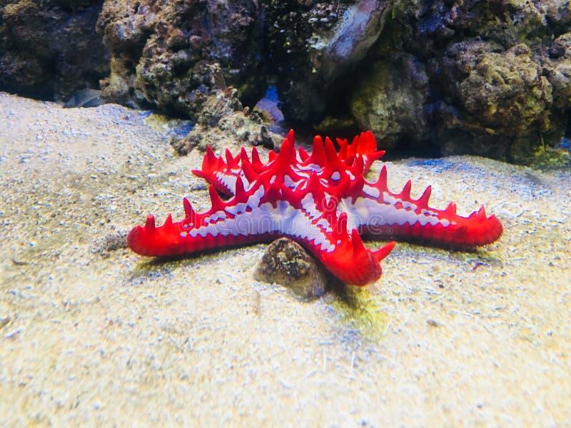 Pesce della stella di mare fotografia stock libera da diritti