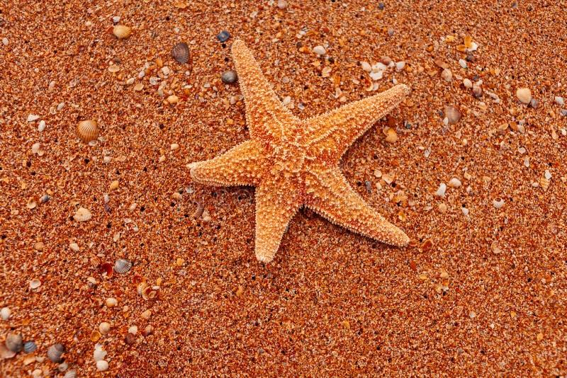 Pesce della stella sulla sabbia grezza fotografia stock libera da diritti