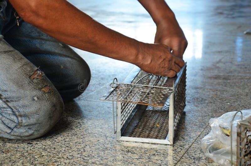 Pesce dello sgombro di uso dell'uomo anziano per stile tailandese della trappola di ratto fotografia stock libera da diritti