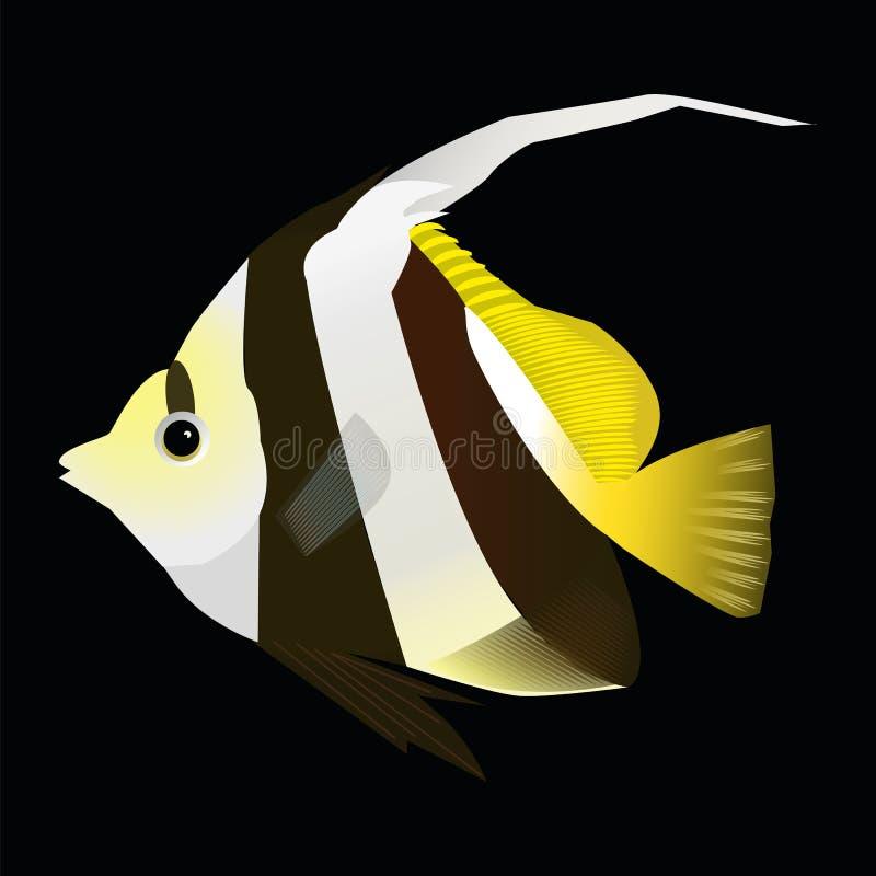 Pesce di angelo su un fondo nero illustrazione di stock