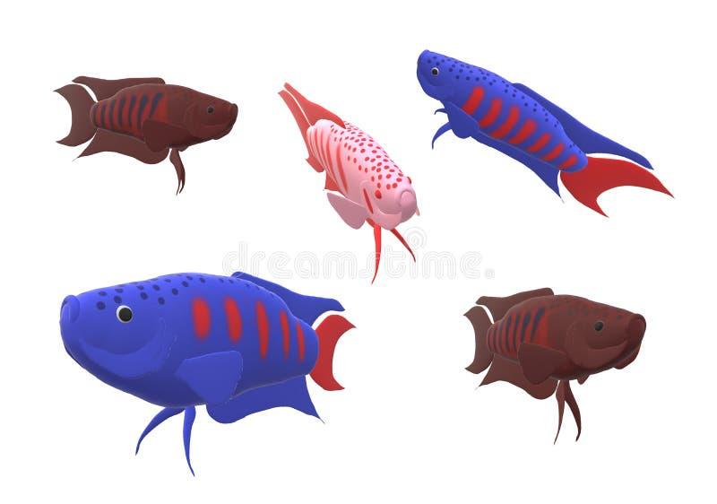Pesce di gorami nero di paradiso nell'illustrazione 3D immagine stock libera da diritti