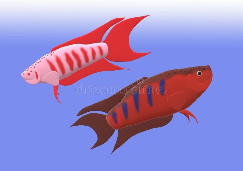 Pesce di gorami nero di paradiso nell'illustrazione 3D fotografie stock libere da diritti