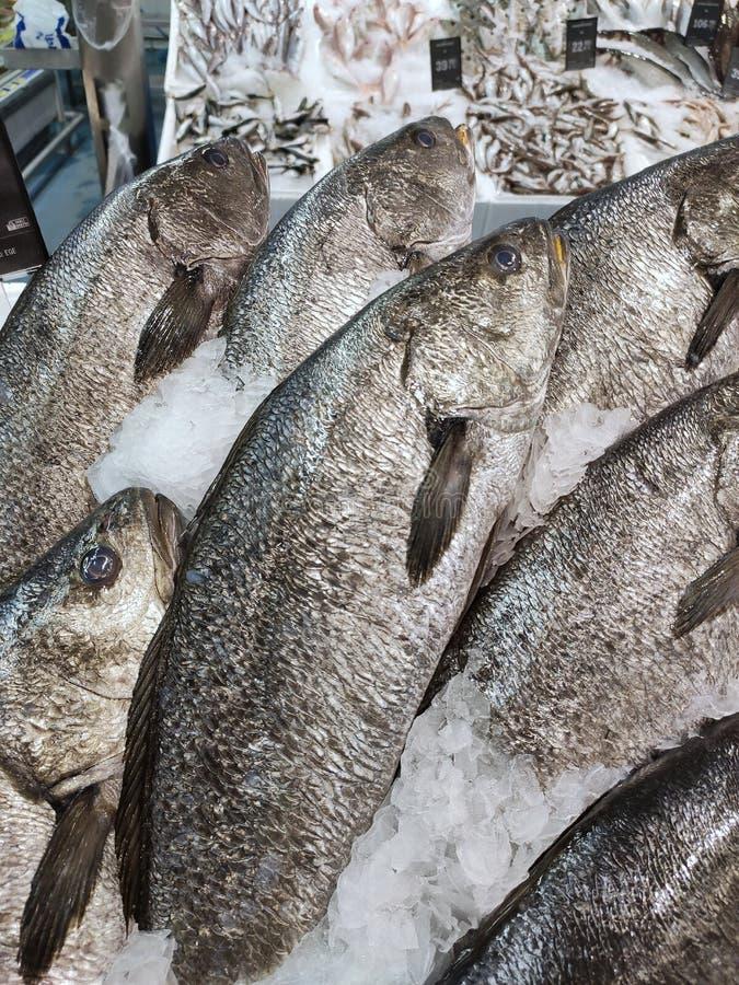 Pesce di mare visualizzato nel contatore dei pesci immagine stock