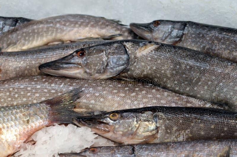Pesce di suino raffreddato con ghiaccio e impilato in vendita sul mercato del pesce immagini stock