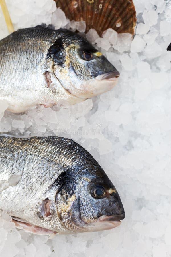 Pesce e conchiglia a ghiaccio immagini stock libere da diritti