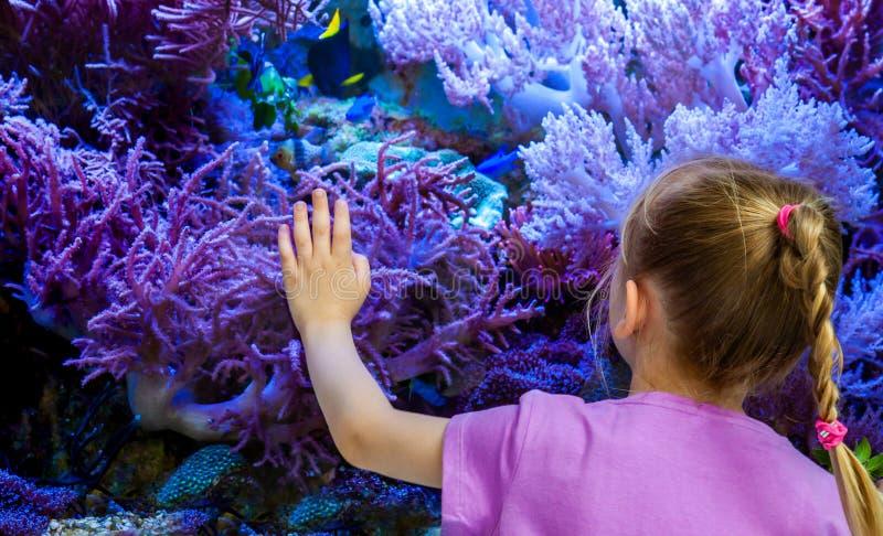 Pesce e coralli di sorveglianza della bambina nell'acquario fotografie stock