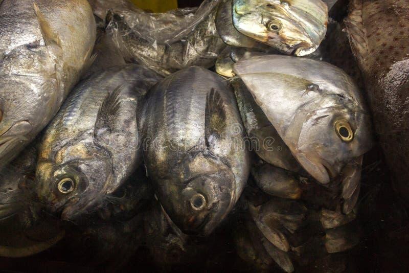 Pesce fresco ad una stalla del mercato fotografia stock libera da diritti