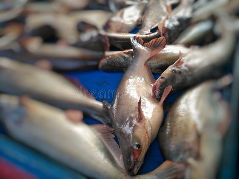Pesce fresco che vende nel mercato fotografia stock