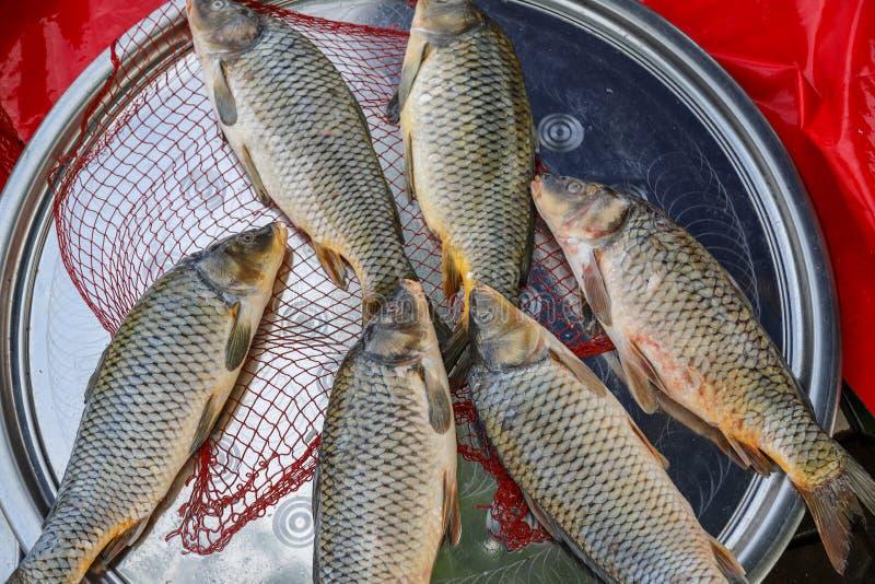 Pesce fresco dal lago o dal fiume immagine stock