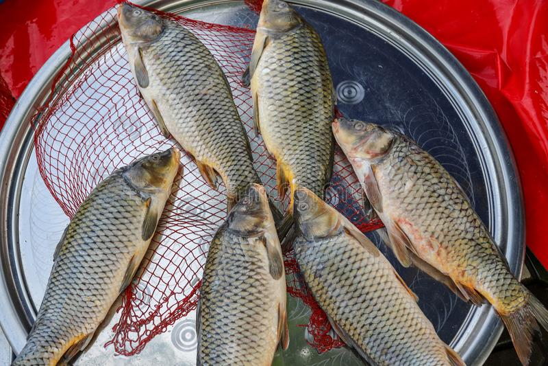 Pesce fresco dal lago o dal fiume fotografia stock libera da diritti