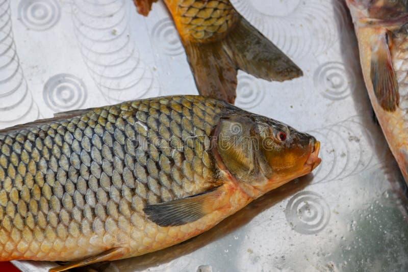 Pesce fresco dal lago o dal fiume fotografia stock