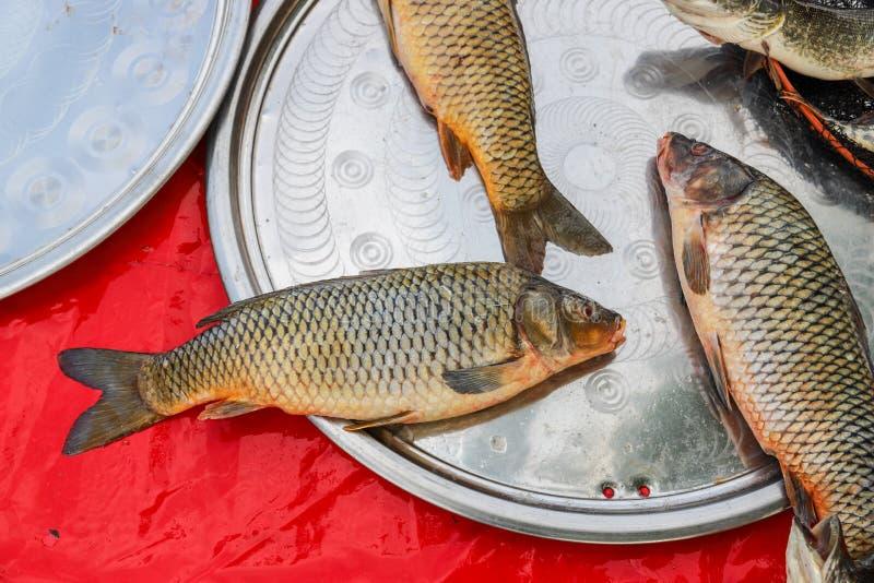 Pesce fresco dal lago o dal fiume fotografie stock libere da diritti