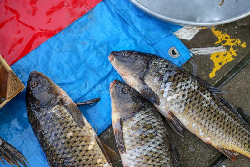 Pesce fresco dal lago o dal fiume immagine stock libera da diritti