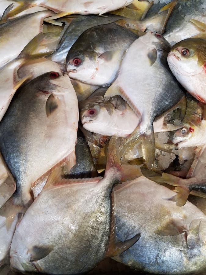 Pesce fresco del primo piano immagine stock