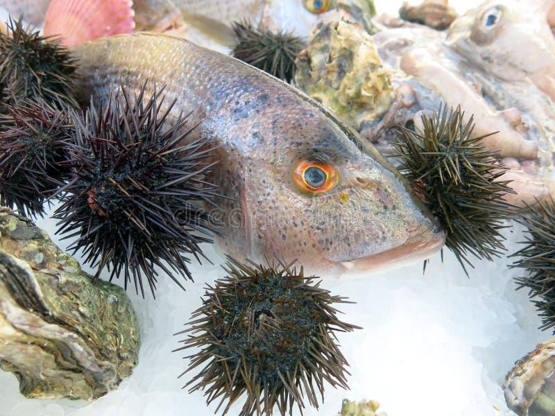 Pesce fresco e ricci di mare nel ristorante dei frutti di mare in Italia fotografia stock libera da diritti