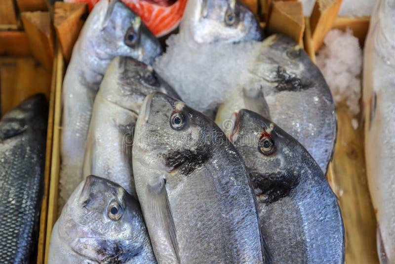 Pesce fresco nel mercato ittico immagine stock