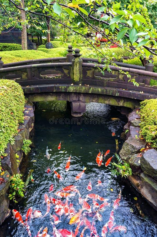 Pesce giapponese variopinto della carpa a specchi in uno stagno fotografie stock