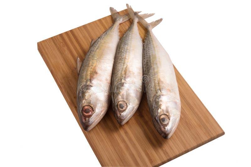 Pesce indiano fresco dello sgombro sul pannello di legno immagine stock