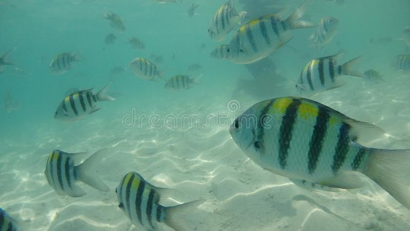 Pesce intorno all'isola di Phuket in Tailandia immagine stock libera da diritti