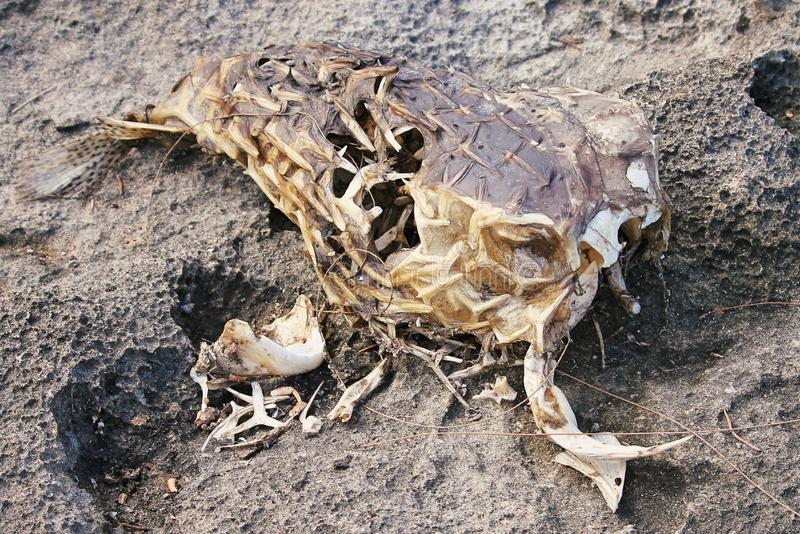 Pesce morto fotografie stock
