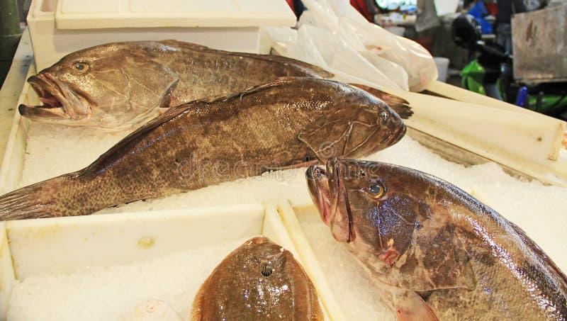 Pesce nel mercato della carne a Atene del centro, Grecia immagini stock