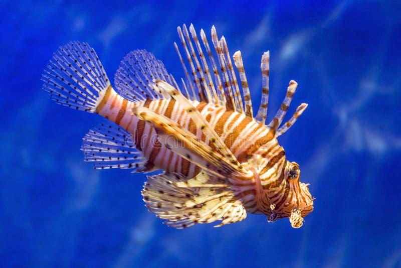 Pesce nell'acqua immagini stock