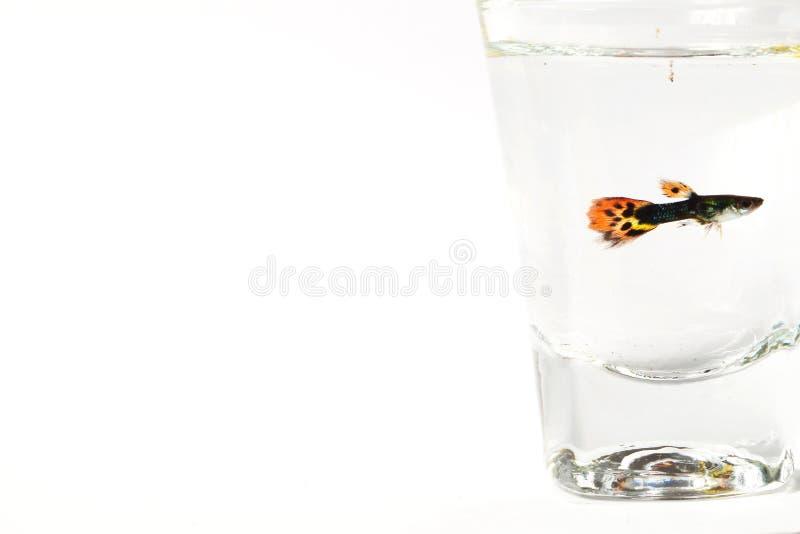 Pesce nella scena di vetro fotografie stock libere da diritti