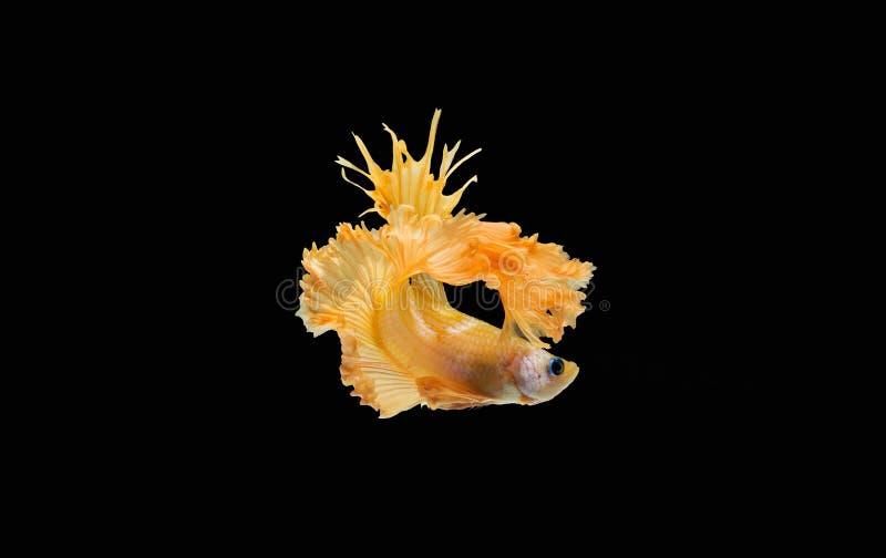 Pesce per la Tailandia immagine stock