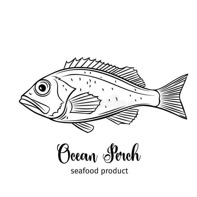 Pesce persico di vettore illustrazione vettoriale
