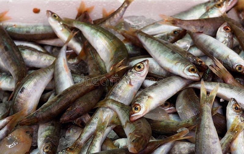 Pesce pescato fresco nel mercato di Candia Grecia fotografia stock