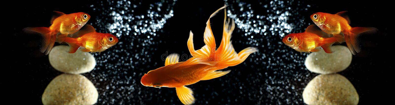 Pesce rosso fotografie stock