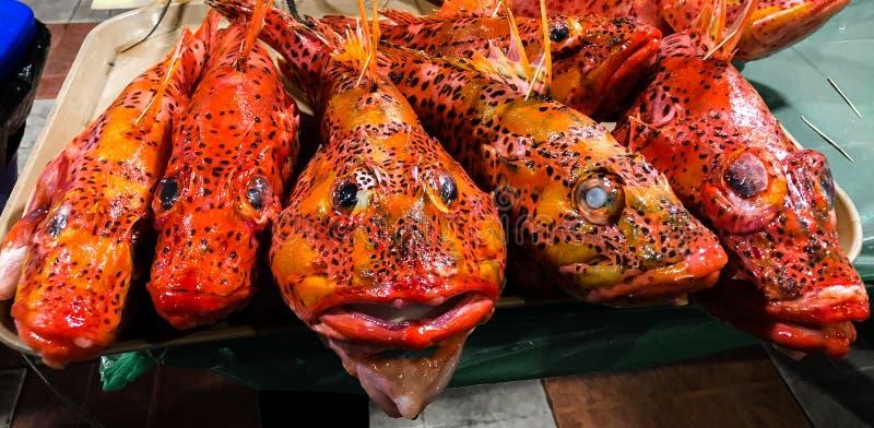 Pesce rosso con i punti neri sul piatto del vassoio per alimento immagine stock