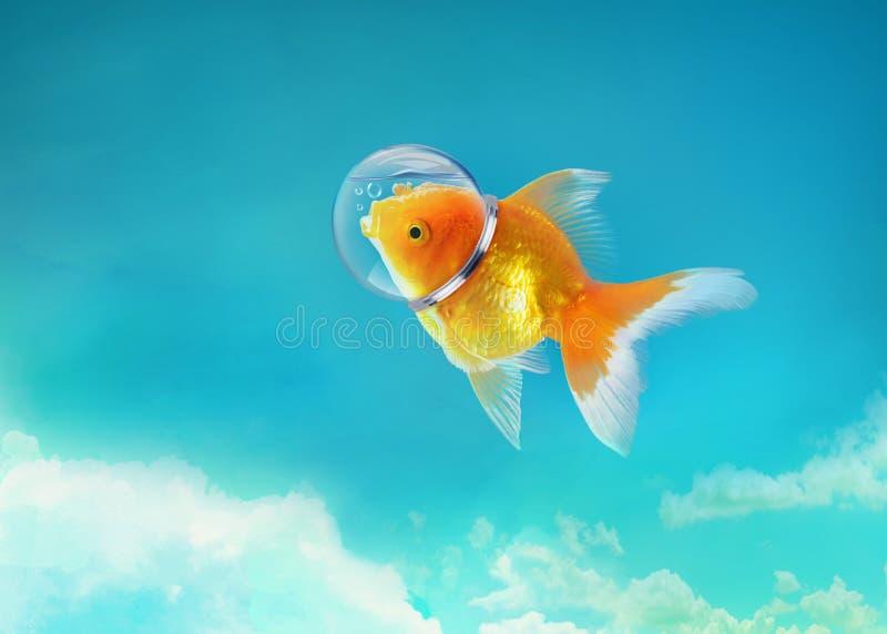 Pesce rosso nel cielo con il cappello dell'astronauta, nuotata nel cielo blu, media misti del pesce dell'oro storie enigmatiche,  fotografia stock libera da diritti