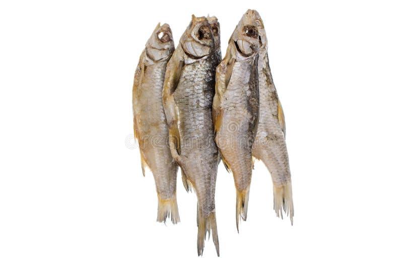 Pesce salato secco del triotto su un fondo bianco isolato fotografia stock libera da diritti