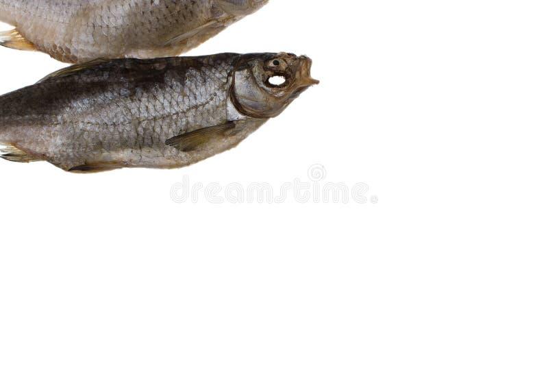 Pesce salato secco del triotto su un fondo bianco isolato fotografie stock libere da diritti