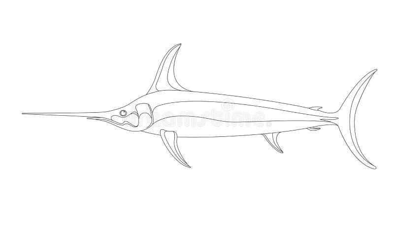 Pesce spada atlantico, illustrazione di vettore, allineante tiraggio illustrazione di stock