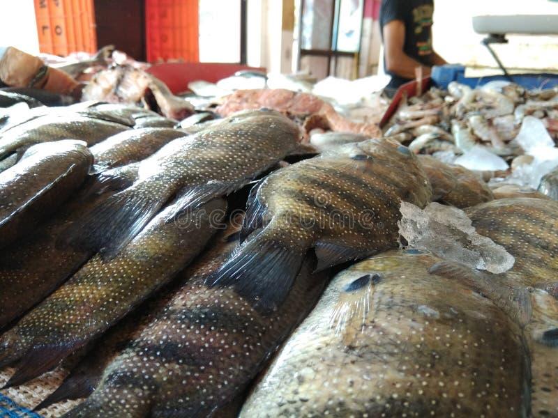 Pesce speciale di Karimeen Kerala immagini stock
