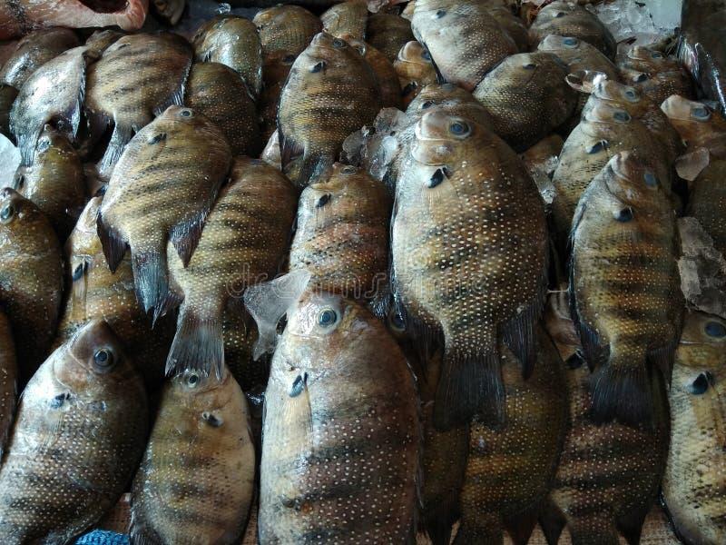 Pesce speciale di Karimeen Kerala fotografia stock