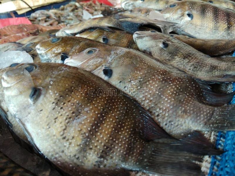 Pesce speciale di Karimeen Kerala immagine stock