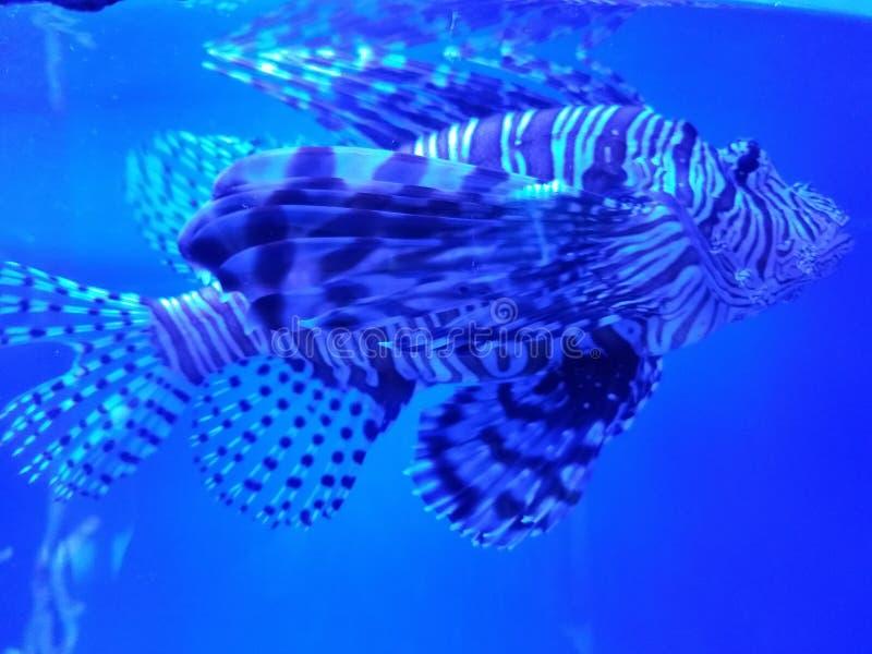 Pesce strano 2 fotografia stock