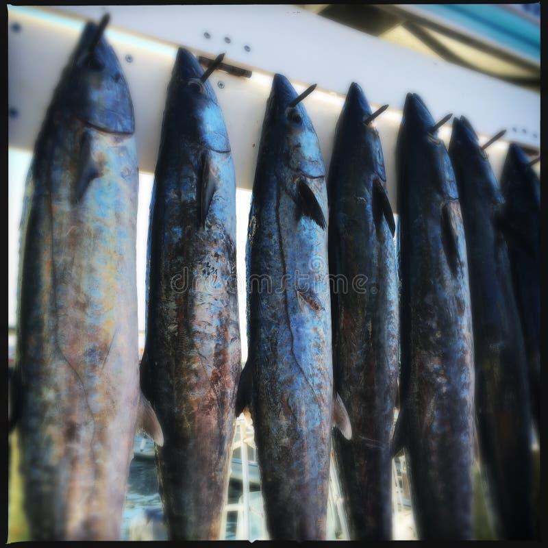 Pesce sui ganci, Destin, Florida fotografia stock