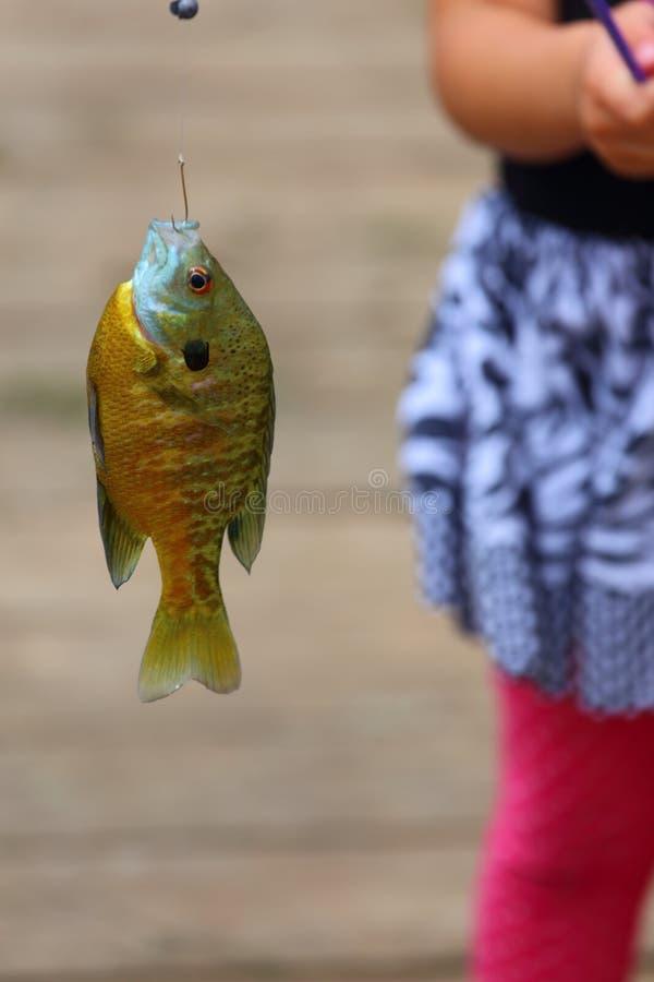 Pesce sul gancio fotografie stock