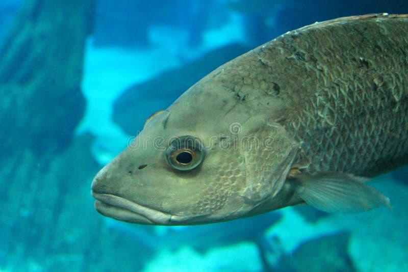 Pesce sull'acquario fotografia stock libera da diritti