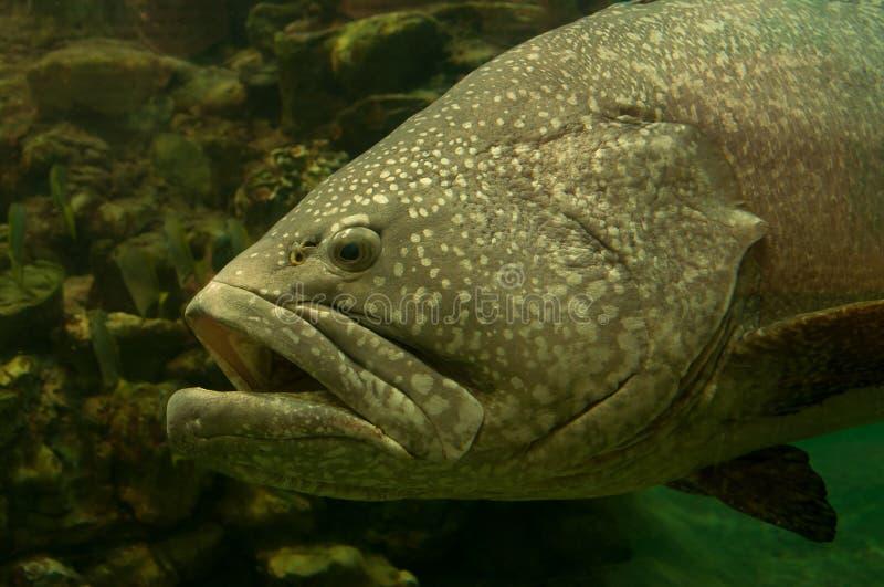 Download Pesce tropicale immagine stock. Immagine di scuba, marino - 30825673