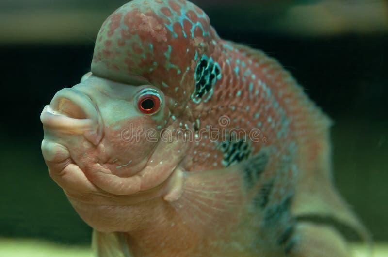 Download Pesce tropicale fotografia stock. Immagine di animale - 30825700