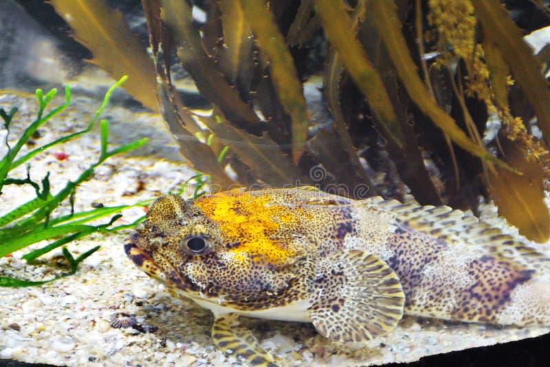 Pesce in un acquario fotografia stock libera da diritti