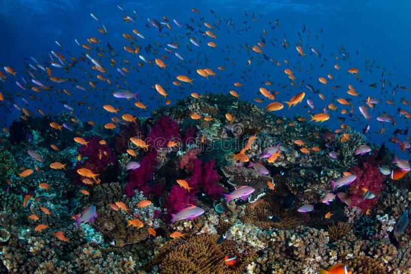 Pesce variopinto e Coral Reef immagini stock libere da diritti